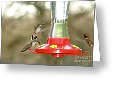 Hummingbird Trio Greeting Card