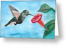 Hummingbird Trumpet Greeting Card