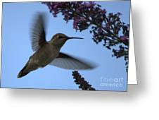Hummingbird Wings And Butterfly Bush Greeting Card