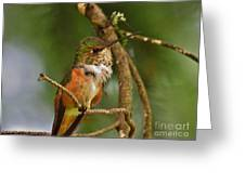 Hummingbird With An Itch Greeting Card