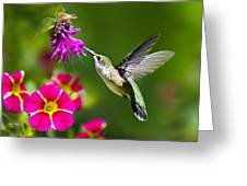 Hummingbird With Flower Greeting Card