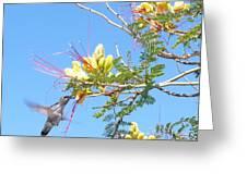 Hummingbird With Honeysuckle Greeting Card