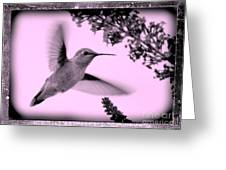 Hummingbird With Old-fashioned Frame 2  Greeting Card