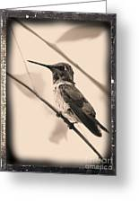 Hummingbird With Old-fashioned Frame 3 Greeting Card