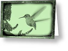 Hummingbird With Old-fashioned Frame 5 Greeting Card