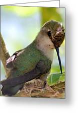 Hummingbird With Small Nest Greeting Card