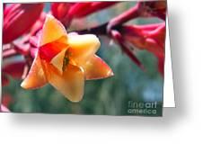 Hummingbird Yucca Greeting Card