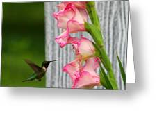 Hummingbird1 Greeting Card