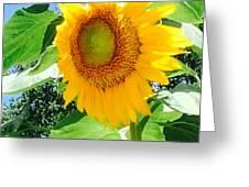 Humongous Sunflower Greeting Card