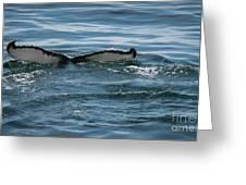 Humpback Tail Fins Greeting Card
