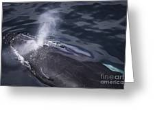 Humpback Whale Blowing Greeting Card