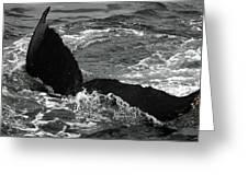 Humpback Whale Fluke 3 Greeting Card