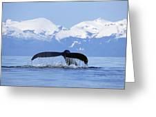Humpback Whale Megaptera Novaeangliae Greeting Card by Konrad Wothe