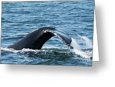 Humpback Whale Of A Tail Greeting Card
