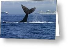 Humpback Whale Tail Lobbing Near Cruise Greeting Card by Flip Nicklin