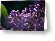 Hungarian Lilac 5 Greeting Card