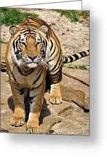 Hunger Tiger Greeting Card