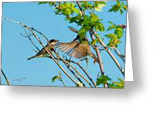 Hungry Birds In Tree Close-up Greeting Card