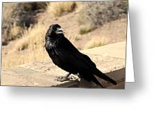 Hungry Crow Greeting Card