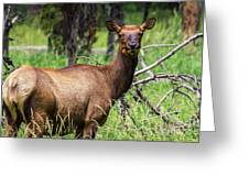 Hungry Elk Greeting Card