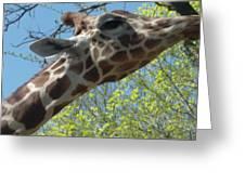 Hungry Giraffe Greeting Card