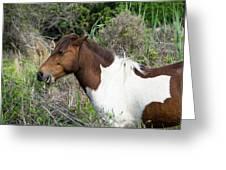 Hungry Horse - Assateague Island - Maryland Greeting Card