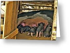 Hungry Piglets Greeting Card