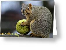 Hungry Squirrel 1 Greeting Card