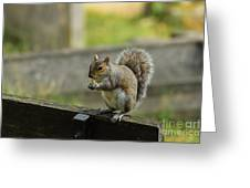 Hungry Squirrel Greeting Card