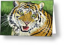 Hungry Tiger Greeting Card