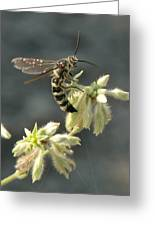 Hunter Wasp Greeting Card