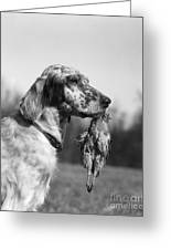 Hunting Dog With Quail, C.1920s Greeting Card
