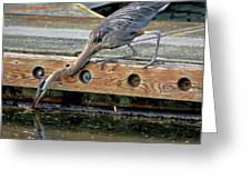 Hunting Heron Greeting Card