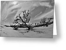 Hunting Island Beach And Driftwood Black And White Greeting Card