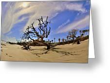 Hunting Island Beach And Driftwood Greeting Card