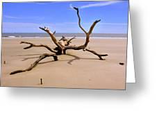 Hunting Island Beach Beaufort Sc Greeting Card