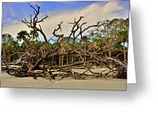 Hunting Island Driftwood Beach Beaufort Sc Greeting Card
