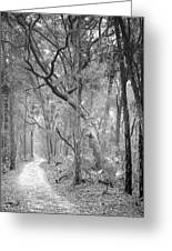 Hunting Island Path  Greeting Card
