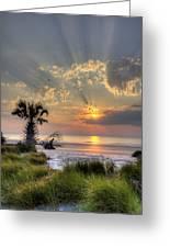 Hunting Island Sc Sunrise Palm Greeting Card