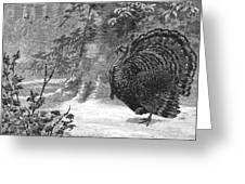 Hunting: Wild Turkey, 1886 Greeting Card
