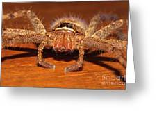 Huntsman Spider Greeting Card by Joerg Lingnau