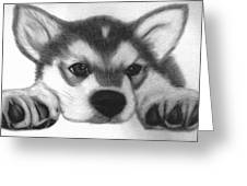 Huskie Pup Greeting Card by Susan Barwell