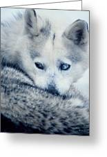 Husky Curled Up Greeting Card