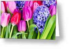 Hyacinth And  Tulip Flowers Greeting Card