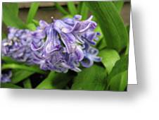 Hyacinth Flowers Greeting Card by Richard Mitchell