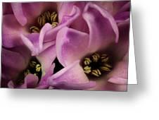 Hyacinth Greeting Card