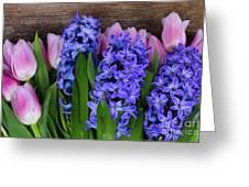 Hyacinths And Tulips II Greeting Card