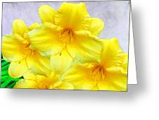 Hybrid Daffodils Greeting Card