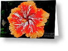 Hybrid Hibiscus II Maui Hawaii Greeting Card