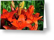 Hybrid Lilies Greeting Card